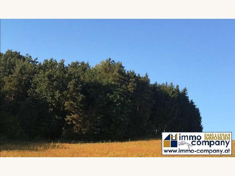 Wald2 - Forstwirtschaft Güssing - Bild 1